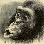 darwin-social-psychology-animals